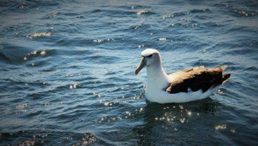 Albatross Bay of Fires